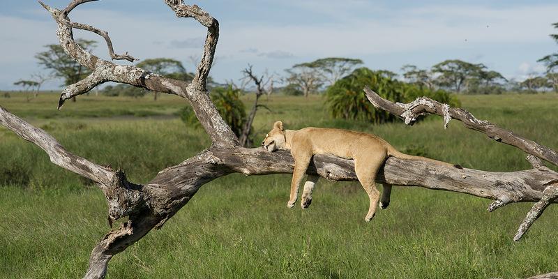 Diario di viaggio in Tanzania: alla scoperta di tutti i volti dell'Africa