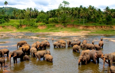 Sry Lanka, l'isola del tè e non solo
