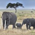 Ecoturismo e Safari Wild in Sud Africa
